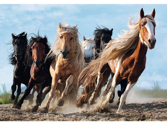 Galloping-Horses-1000-Piece-Trefl-Jigsaw-Puzzle